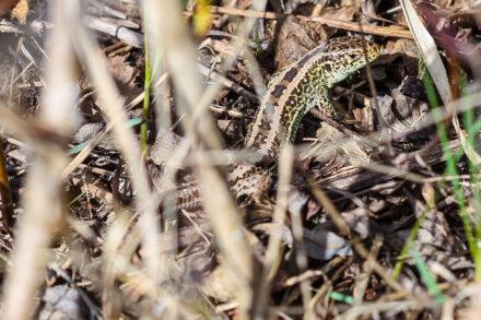 Echspedition – Reptilien im Oberland